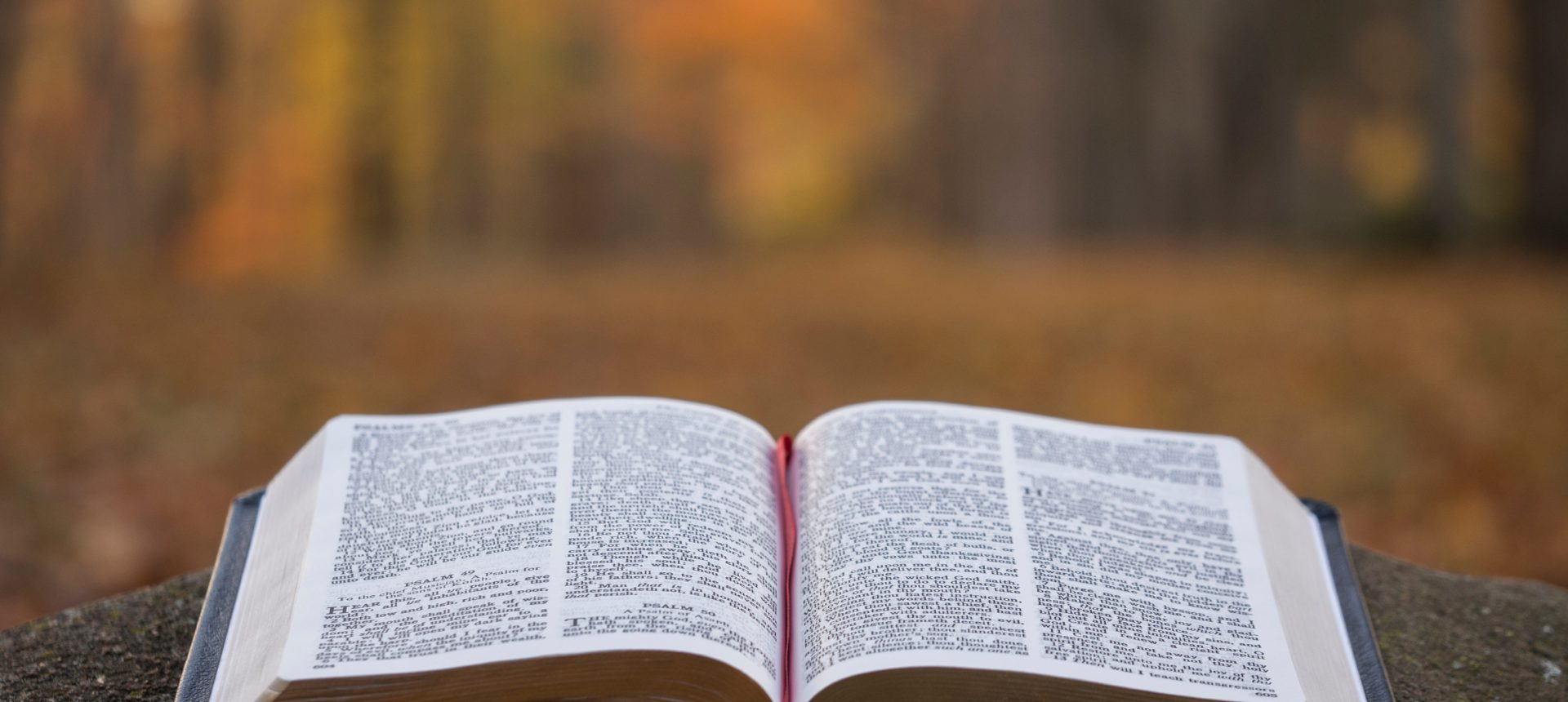 bible page on gray concrete surface